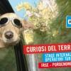 Curiosi del territorio 2014 – Stage Formativo Internazionale